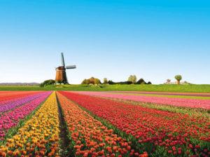 TripLife Gohagan_RLDutchWW_2012_01_HollandWindmillTulips-2-300x224