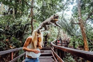 TripLife Moneky-Forest-Ubud_1-300x200
